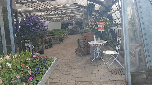 Eine grosse Gärtnerei. Viele Blumen, keine Leute.