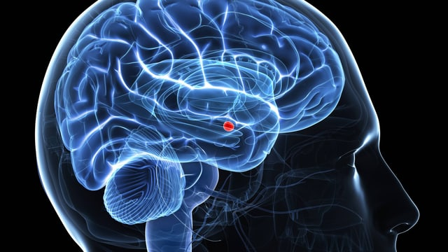 Schema des Gehirns mit der Amygdala als roten Punkt.