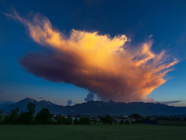 Der Ambos-Wolkenschirm einer sterbenden Gewitterwolke wird von der untergehenden Sonne angestrahlt.