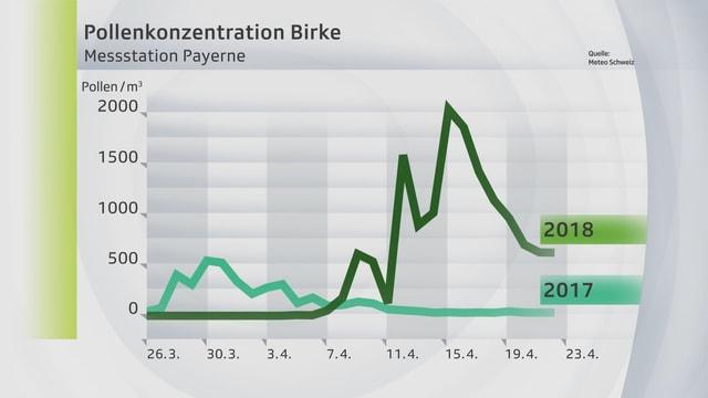 Die Pollenkonzentration der Birke ist 2018 deutlich stärker.