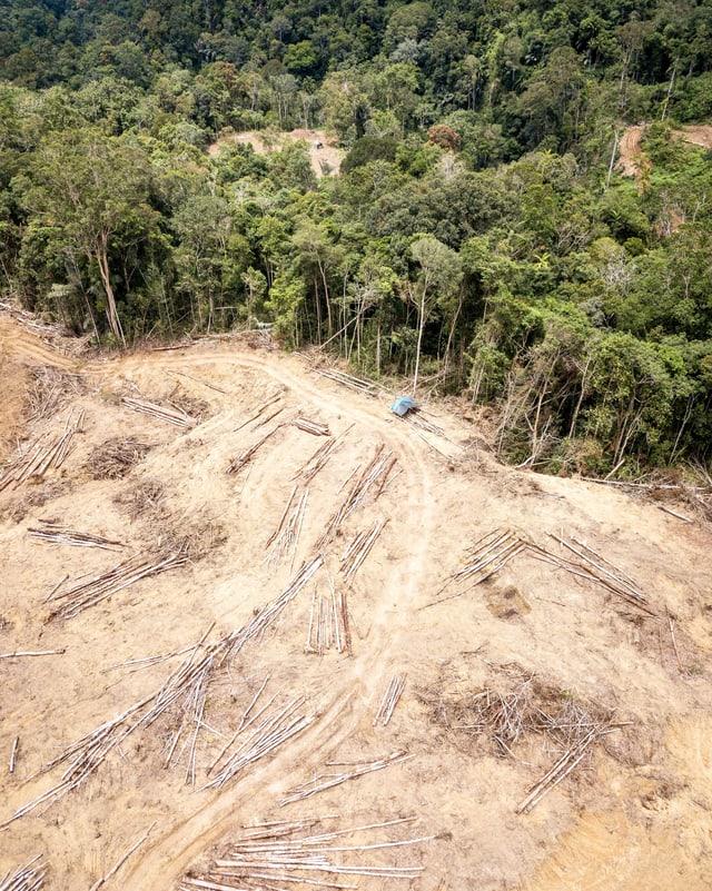 Ein Wald, der abgerodet wird.