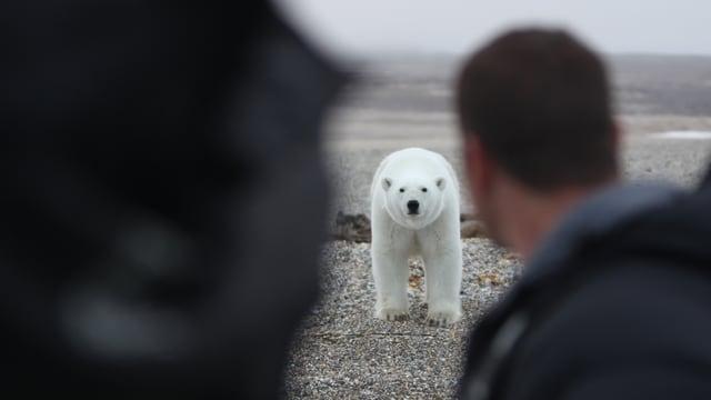 Video «Arktis» abspielen
