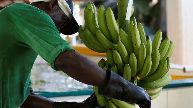 Ein Mann arbeitet auf einer Bananenfarim in Carepa (Kolumbien).