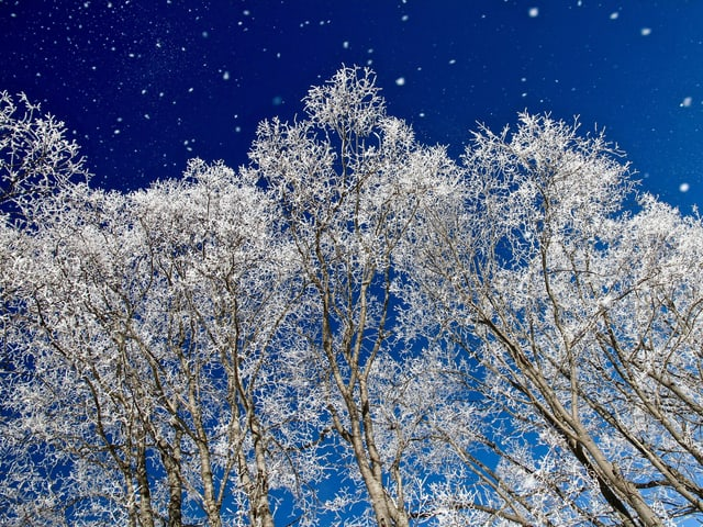 Frostige Bäume vor blauem Himmel