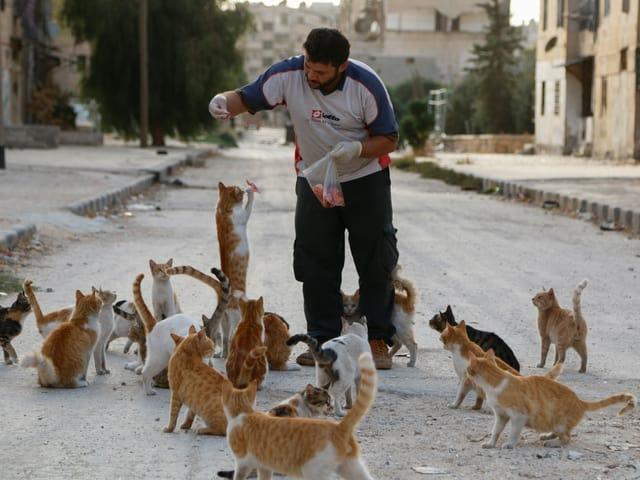 Ein Mann steht auf der Strasse und füttert Katzen.