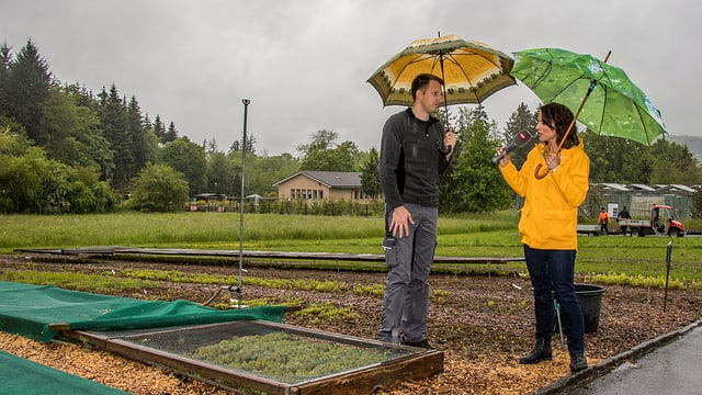 Gabor Reiss erklärt den Versuchsgarten