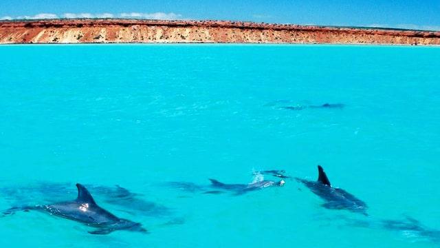 Delfine in türkisem Wasser, im Hintergrund eine Küste
