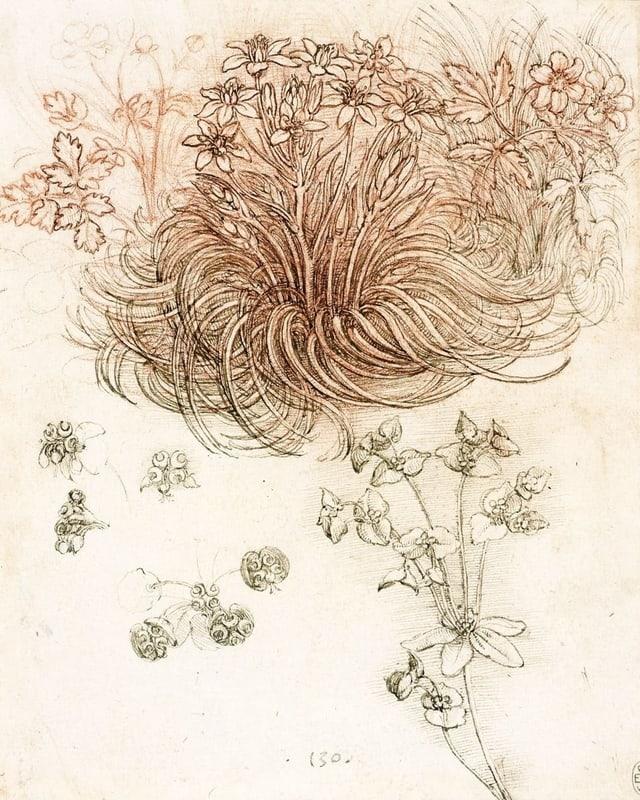 Da Vinci Skizze: Pflanzen