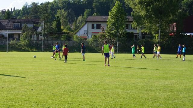 Ein Gruppe von Knaben spielt auf einer grünen Wiese Fussball.