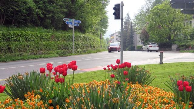 Autos auf der Friedentalstrasse in Luzern. Im Vordergrund ein Blumenbeet.