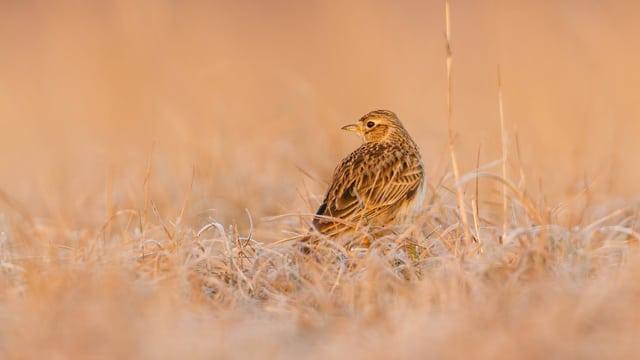 Ein Vogel in einem Feld.