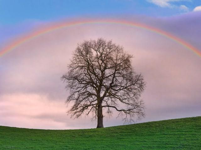 rosa Regenbogen