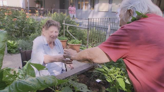 Man erkennt zwei ältere Damen, die in einem Stadtgarten stehen. Die Dame im Vordergrund trägt ein rotes Shirt, hat längere weisse Haare und reicht einer weiteren Dame mit Bluse etwas unerkennbares. Zudem erkennt man Hochbeete, in denen diverse Dinge angepflanzt sind. Im Hintergrund sieht man der erste Stock eines vermutlich höheren Hauses.