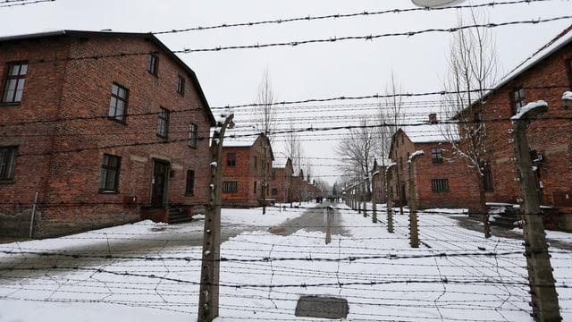 Il champ da destrucziun Auschwitz Birkenau cun in zic naiv per terra ed ina saiv da fildarom cun spinas.