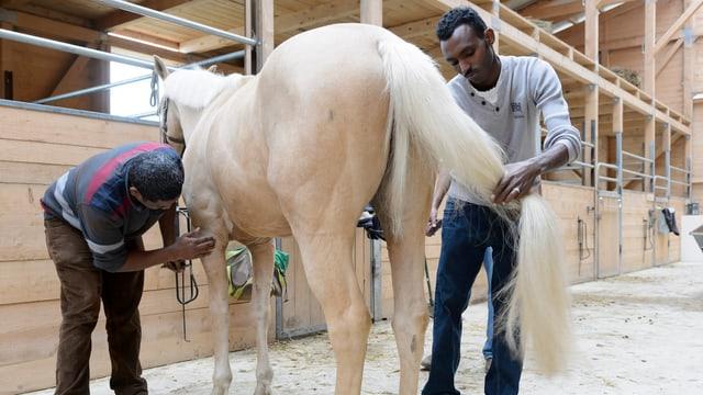 Zwei Migranten pflegen ein Pferd in einem Stall.