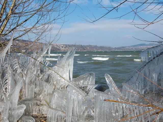 Ufer mit viel Eis an den Schilfhalmen. Auf dem See grosse Wellen, der Himmel hellblau und die Sonne scheint.
