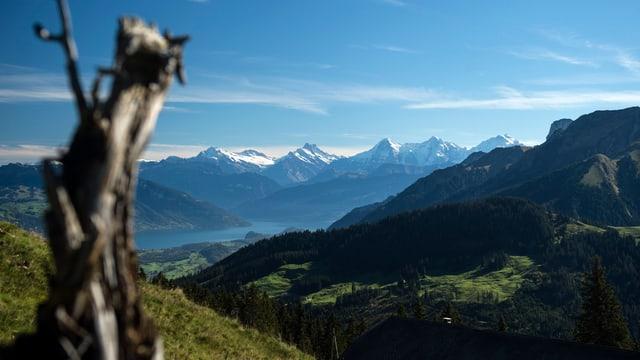 Die Berner Alpen, gesehen vom Gurnigel.