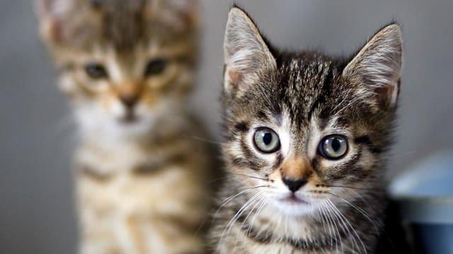 Bild von zwei jungen Katzen.