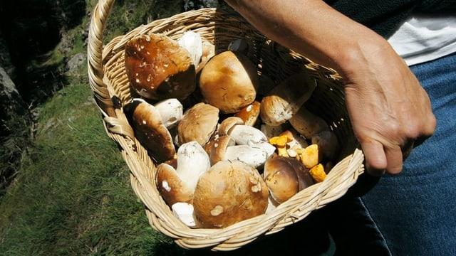 Korb voller Pilze