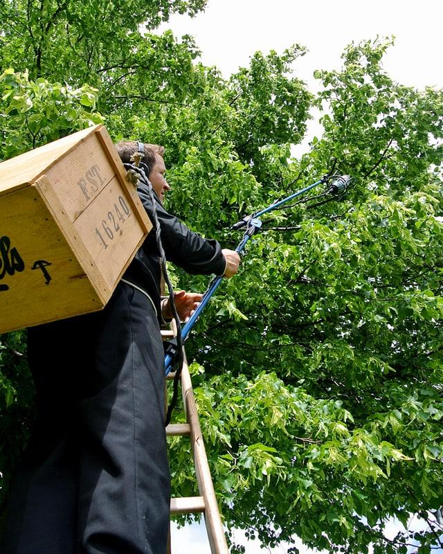 Mann mit Mikrofon auf Leiter am Baum.