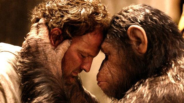 Ein Mann und ein Affe stehen Kopf an Kopf.