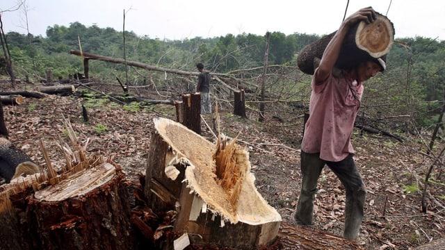 Ein indonesischer Arbeiter trägt ein Stück eines abgeholzten Baumes