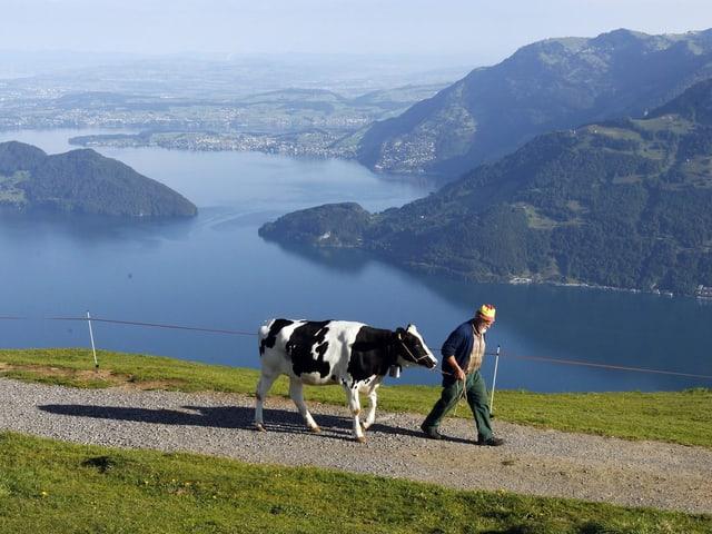 Ein Bauer mit seiner Kuh auf einem Feldweg über dem Vierwaldstättersee.