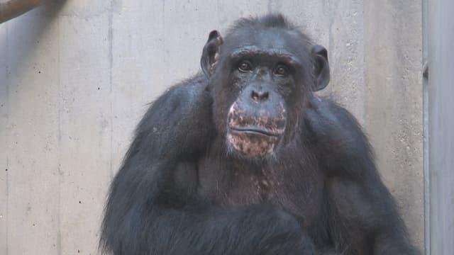 Der alte Affe Eros.