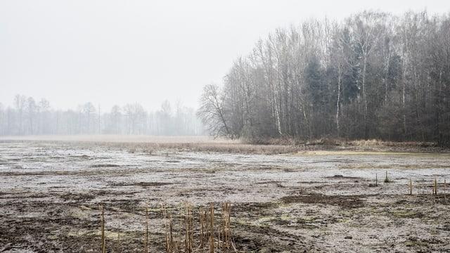 Ein Moorgebiet bei Auschwitz.