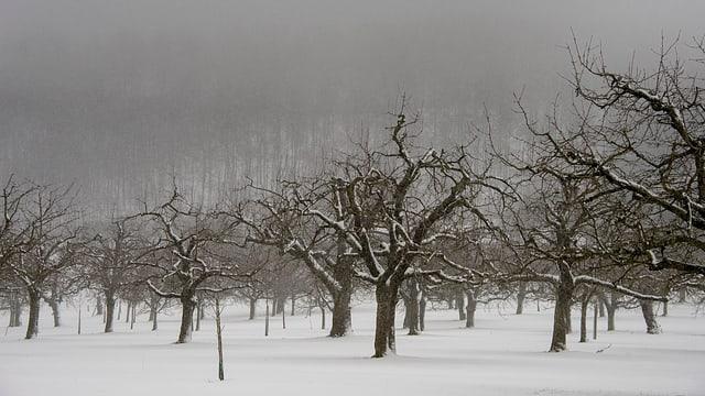 Bäume und Schnee