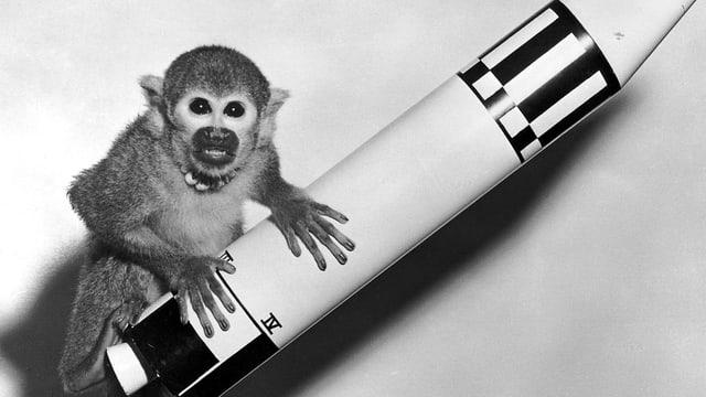 Ein kleiner Affe mit einem Modell einer Rakete.