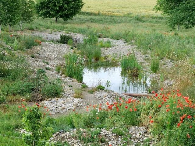 Teich mit Bepflanzung