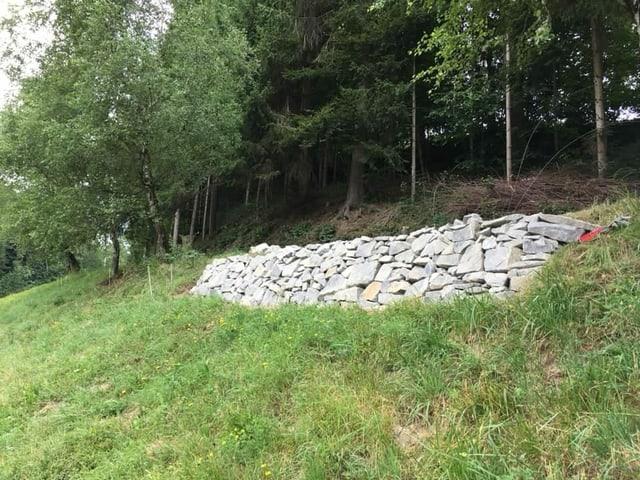 Letztes Jahr hat Guido Häfliger am Waldrand eine Trockensteinmauer erstellt. Die Natursteine bieten Nischen für Reptilien, Insekten, Spinnen, Schnecken, und werden von verschiedenen Pflanzen, Moosen und Flechten besiedelt.