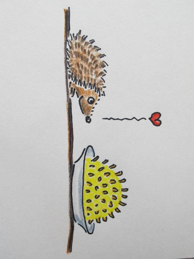 Illustration «Der Igel».