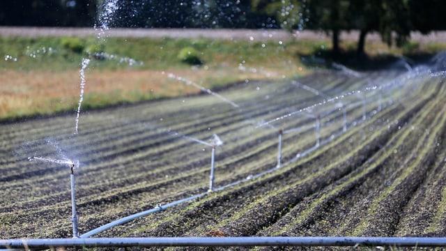 Bewässerungsanlage auf einem Feld