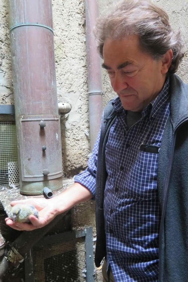 Mann hält junge Taube in Hand.