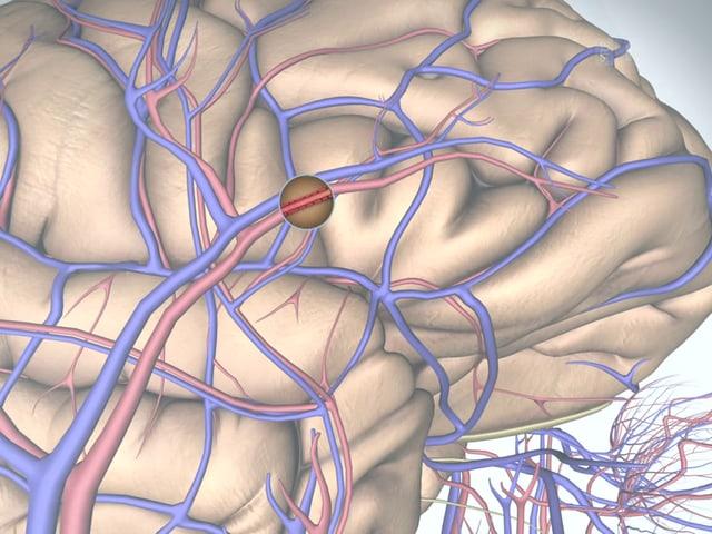 Nahaufnahme des grafischen Gehirns