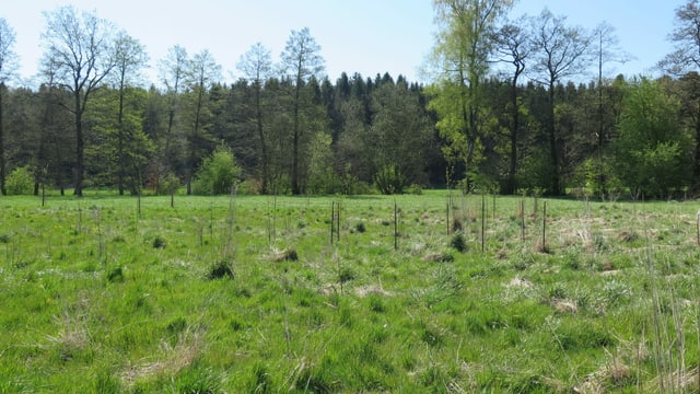 Grünfläche mit jungen Heckenpflanzen, im Hintergrund Wald