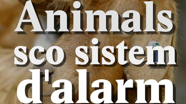 Laschar ir video «Animals sco sistem dalarm»