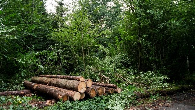 Vom Borkenkäfer befallene gefällte Bäume liegen im Wald