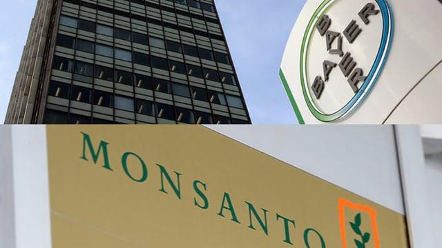 Logo dal concern da chemia Bayer sur logo da Monsanto