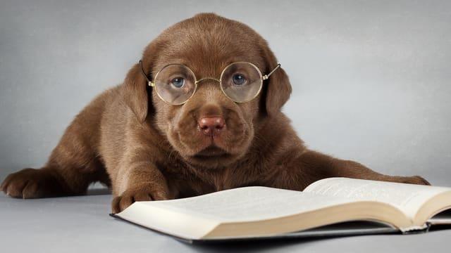 Trage eine Brille.