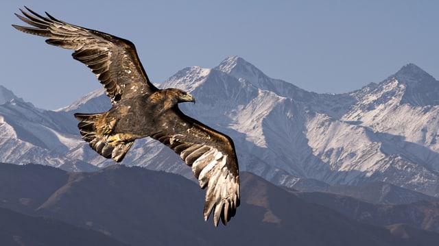 Das Pamir-Gebirge mit Adler im Vordergrund