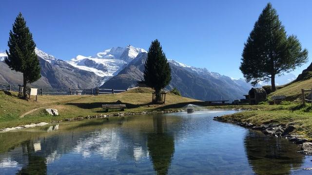 Weiher mit Wiese, Tannen und Bergwelt bei blauem Himmel