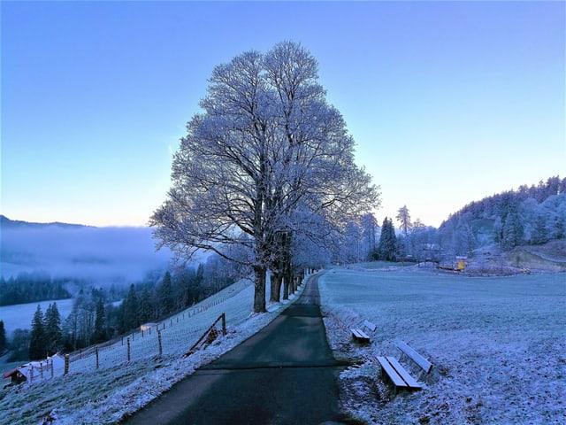 Frostige Morgenstimmung mit Blick aufs Nebelmeer.