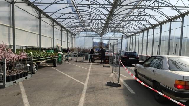 Drive-in für Lebensmittelpflanzen in Schinznach: Die Idee der Firma Zulauf stösst auf Anklang.