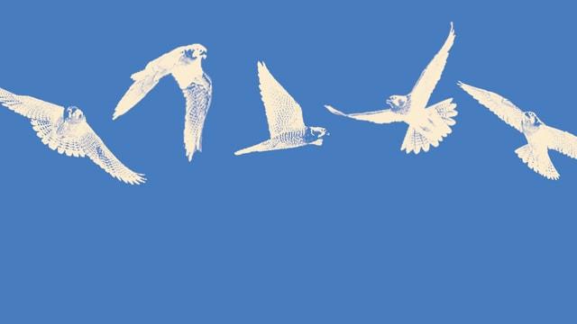 Ausschnitt aus dem Cover: Weisse Vögel vor blauem Hintergrund