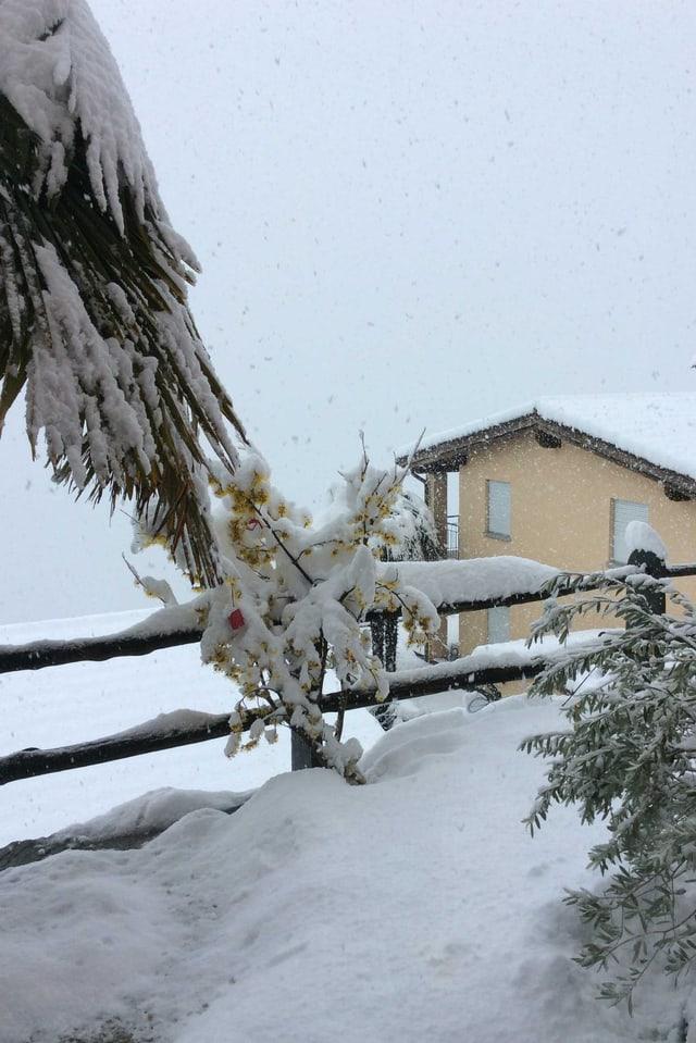 Meterhoher Schnee in Brissago