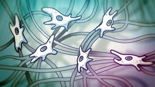 Fibrolasten, die fleissigen «Faszien-Ameisen»