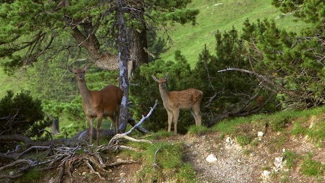 Video «100 Jahre Schweizerischer Nationalpark (1/6)» abspielen